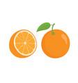 oranges orange slice half cut orange and front vector image
