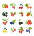 set of berries vector image