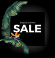 tropic summer night sale on black with vector image vector image