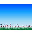 Tulips field background