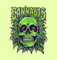 green cannabis skull weeds plant vector image vector image