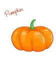 isolated cartoon fresh hand drawn pumpkin vector image vector image