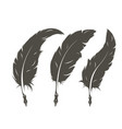 set three isolated feathers for writing vector image vector image