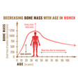 bone mass decreasing vector image vector image