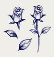 sketch rose flower bud and leaves vector image vector image