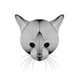 cat on white background vector image