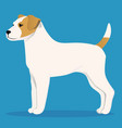 parson russel terrier vector image