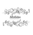 set of hand drawn botanical sketch mistletoe vector image vector image