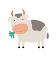 cute cartoon cow with a flower vector image vector image