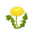 dandelion with yellow flower and green leaves vector image vector image