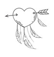 heart with feathers pierced with an arrow vector image vector image