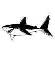 dangerous angry shark print graphic vector image vector image