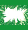 frame of fern leaves vector image vector image