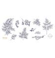 set detailed botanical drawings moringa vector image