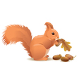 Squirrel with acorns vector image vector image