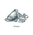 octopus drawing image in engraving style vector image