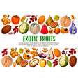 exotic fruits and berries tropical food vector image vector image