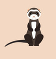gray ferret in full growth sits flat vector image vector image