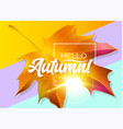 hello autumn autumn design with yellow maple vector image