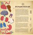 medical concept with human organs vector image vector image