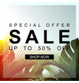summer sale banner with palm leaf special offer vector image