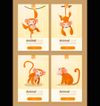 Animal banner with Monkeys for web design 1 vector image vector image