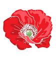 beautiful poppy flower of big poppy bud isolated vector image vector image