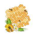 bees and honeycomb vector image vector image