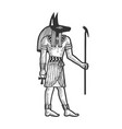anubis ancient egyptian god death sketch vector image