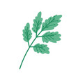 branch vegetation leaves foliage nature icon vector image vector image