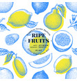 citrus fruits seamless pattern hand drawn vector image vector image