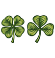 Clover with three and four leafs vector image vector image