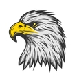 Proud eagle head Color version vector image