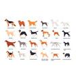 set of dogs of different breeds isolated on white vector image
