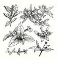 drawing plants set vector image vector image