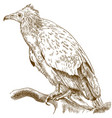 engraving of egyptian vulture vector image