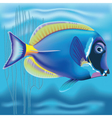 Exotic fish Acanthurus vector image vector image