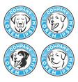 pet dog logo vector image vector image