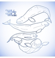Graphic beluga whale collection vector image vector image