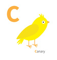 Letter C Canary bird Zoo alphabet English abc with vector image vector image
