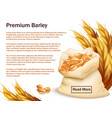 realistic barley ears and grains isolated on vector image vector image