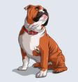 cute brown english bulldog dog sitting vector image vector image