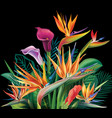 floral bouquet with strelitzia flowers vector image vector image