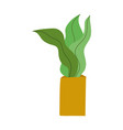 plant in pot decoration interior leaves isolated vector image vector image