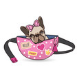 dog in waist bag funny domestic cute animal vector image vector image