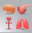 internal organs realistic icon set in vector image vector image