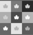 maple leaf sign grayscale version of vector image vector image