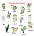 best garden herbs for better digestion vector image vector image