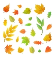 Big set of cute leaves from different trees on vector image