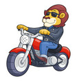 lion riding motorbike vector image
